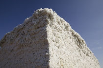 Low angle view of a heap of cotton, Wellington, Texas, USA von Panoramic Images