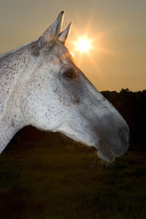 Sunstar Behind Horse by Panoramic Images