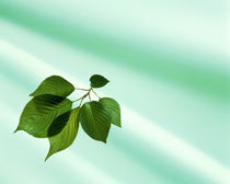 Sprig of green leaves on pale aqua fabric von Panoramic Images