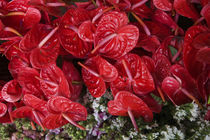 Close-up of Flamingo flowers (Anthurium andraeanum) in a flower market von Panoramic Images