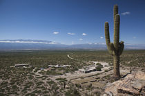 Cactus plants in a desert, Quilmes, Tucuman Province, Argentina by Panoramic Images
