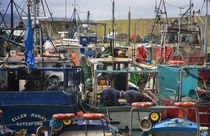 Helvick Fishing Harbour von Panoramic Images