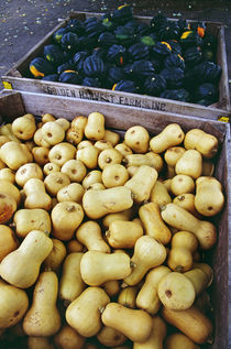 High angle view of bins of harvested butternut and acorn squash, New York, USA. von Panoramic Images