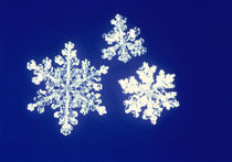 Snowflakes by Panoramic Images