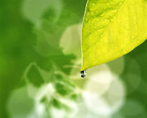 Pale green leaf with dark green background by Panoramic Images