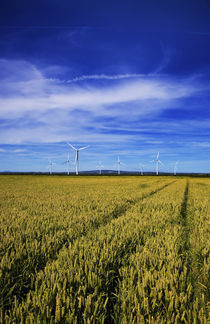 Windfarm Beyond Wheat Field, Bridgetown, County Wexford, Ireland von Panoramic Images