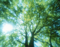 Selective focus trees in forest von Panoramic Images
