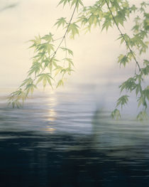 Fog hovering above water with green leafy branches von Panoramic Images