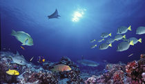 School of fish swimming near a reef, Galapagos Islands, Ecuador von Panoramic Images