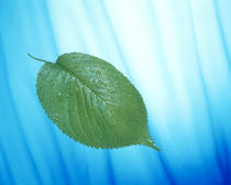Single green leaf on streaked blue and white von Panoramic Images