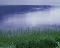 Grass along a river, Norway by Panoramic Images