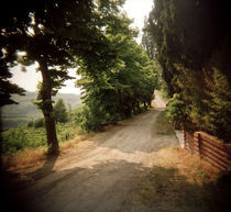 Dirt road passing through a field, Montepulciano, Tuscany, Italy von Panoramic Images