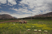 Farmers working in a lettuce field, Tilcara, Quebrada De Humahuaca, Argentina von Panoramic Images