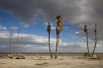 Ghost town in a desert von Panoramic Images