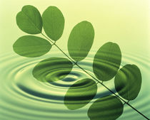 Green leafy branch superimposed on green water ripples by Panoramic Images