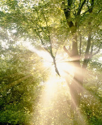 Burst of white light through green trees von Panoramic Images