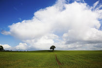 Oak Tree in Arable Field, Near Carlow, Co Carlow, Ireland by Panoramic Images