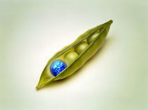 A small globe and three green peas nestled in green pea pod by Panoramic Images