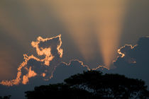 Silhouette of trees at sunset by Panoramic Images