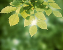 Selective focus close up of green leaves hanging from tree by Panoramic Images