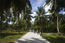 Palm trees in a park by Panoramic Images
