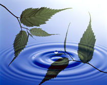 Two branches with green leaves floating above blue water ripples von Panoramic Images