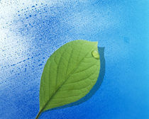 Green leaf floating above streaked water drops von Panoramic Images