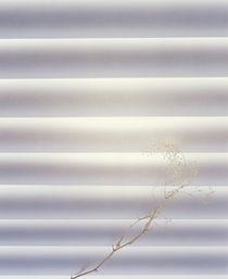 Bright light  von Panoramic Images