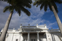 Low angle view of palm tree in front of an art museum by Panoramic Images
