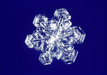 Snowflake von Panoramic Images