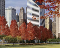 USA, Illinois, Chicago, Millennium Park, Trees in a park, Autumn by Panoramic Images