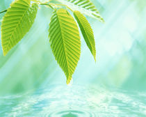 Selective focus close up of green leaves above water ripples in blue by Panoramic Images