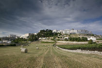 Bales of hay in a field, Locorotondo, Apulia, Italy by Panoramic Images