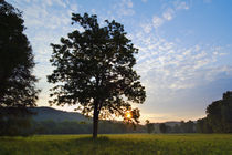 Meadow trees silhouetted by sunset light by Panoramic Images