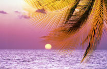 Stylized tropical scene with violet sea, pink sky, setting sun and palm fronds von Panoramic Images
