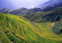 Rice paddy terraces on rolling hills, Longsheng Area, China. von Panoramic Images