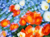 Kaleidoscopic flowers in blues, orange and white by Panoramic Images