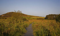 Walkway on the Preserved and Managed Bog, Fenor, County Waterford, Ireland by Panoramic Images