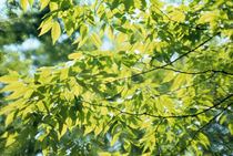 Close-up of leaves on branches von Panoramic Images