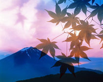 Silhouette of leaves in pink sky with mountain von Panoramic Images