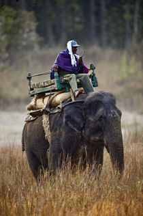Man riding an Indian Elephant (Elephas maximus indicus) von Panoramic Images