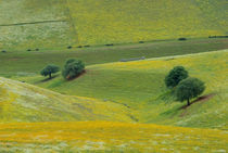 Spring wildflowers blooming on the hillside, Atlas Mountains, Morocco von Panoramic Images