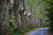 Lime Trees on Feeder to Canal du Midi by Panoramic Images