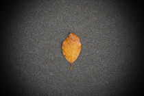 Autumn coloured leaf, On Sandy Beach, Co Waterford, Ireland by Panoramic Images