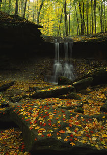 Waterfall in a forest, Blue Hen Falls, Cuyahoga Valley National Park, Ohio, USA by Panoramic Images