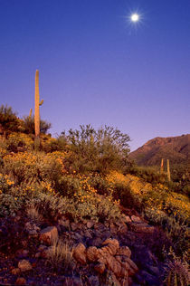 Desert Light by Barbara Magnuson & Larry Kimball