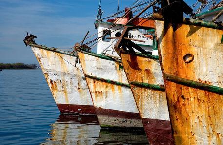 Shrimp-boats
