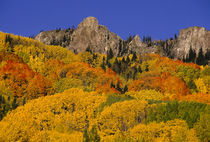 Autumn Aspens by Barbara Magnuson & Larry Kimball