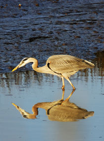 Great Blue Heron at Sunset von Eye in Hand Gallery