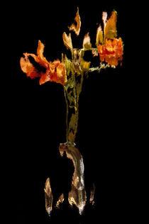 Lily Distortion 191L von Thom Gourley